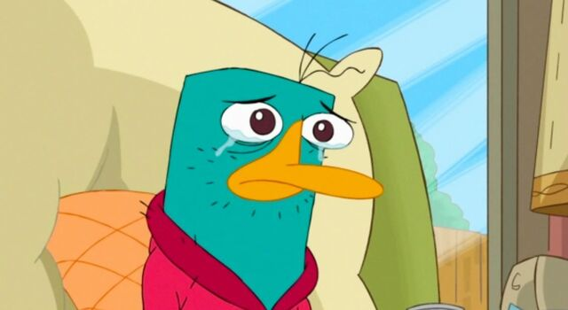 File:Perry-perry-the-platypus-26286704-1131-618.jpg