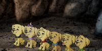 Secret Six' puppies