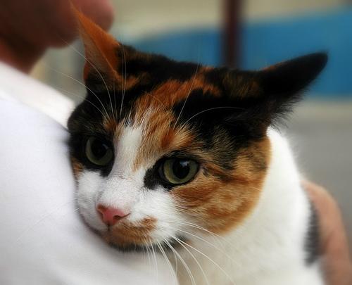 File:Tony's Cat.jpg