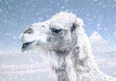 Plik:Wielblad zima.jpg