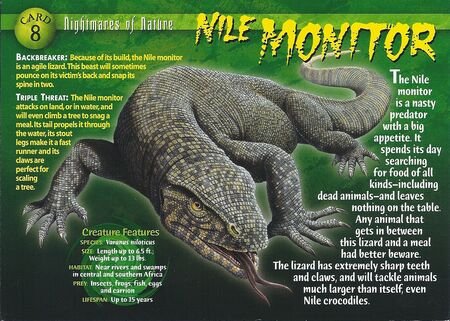 Nile Monitor front