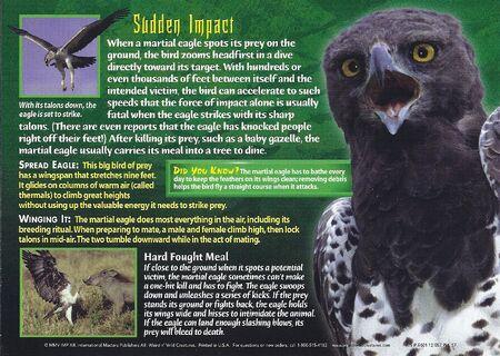 Martial Eagle back