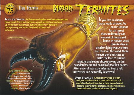 Wood Termites front