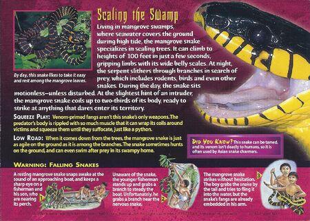 Mangrove Snake back