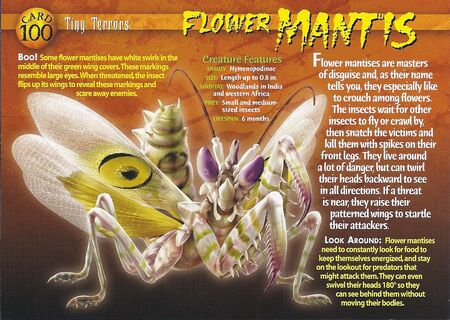 Flower Mantis front