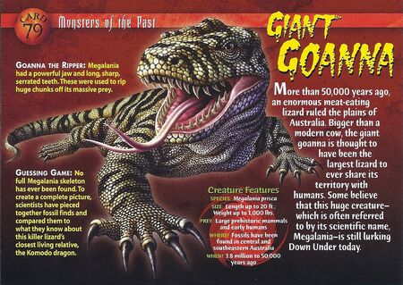 Giant Goanna front