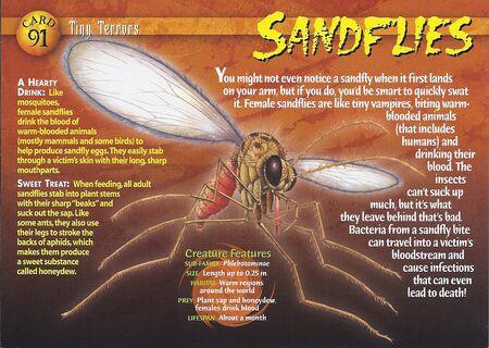 Sandflies front