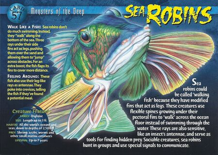 Sea Robins front