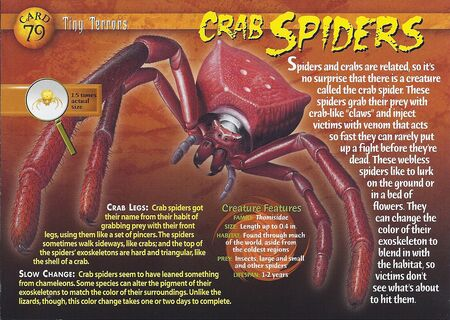 Crab Spiders front