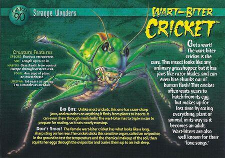 Wart-Biter Cricket front