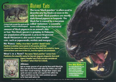 Black Panthers back