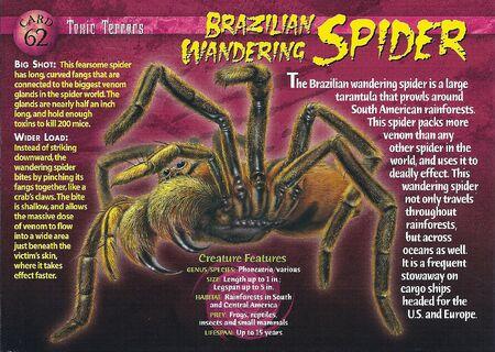 Brazilian Wandering Spider front