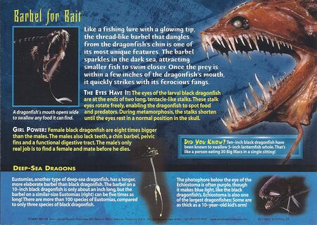 Black Dragonfish back
