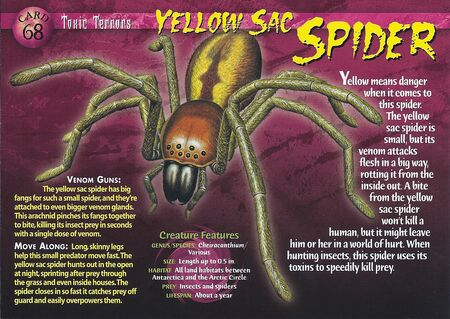 Yellow Sac Spider front