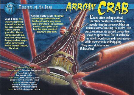 Arrow Crab front