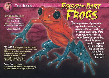 Poison-Dart Frogs front