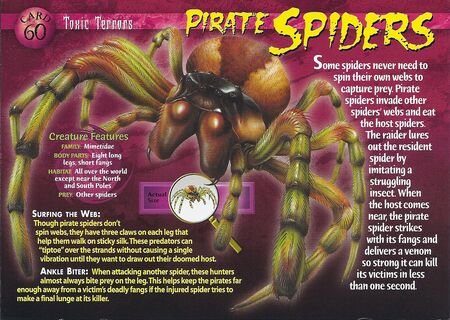 Pirate Spiders front