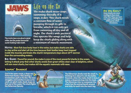 Mako Shark back