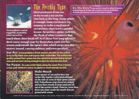 Sea Urchins back