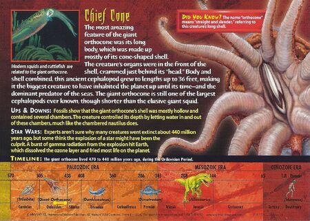 Giant Orthocone back