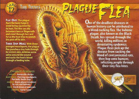 Plague Flea front