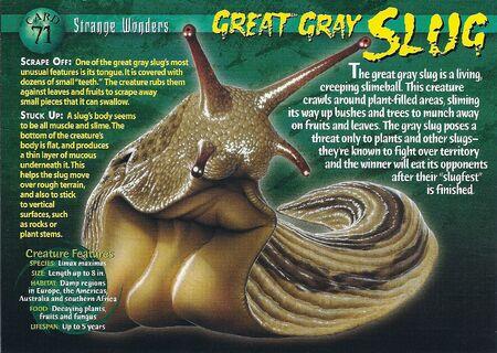 Great Gray Slug front