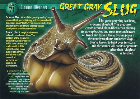 Great Gray Slug Wierd N Wild Creatures Wiki Fandom