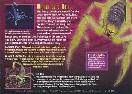 Hairy Scorpion back
