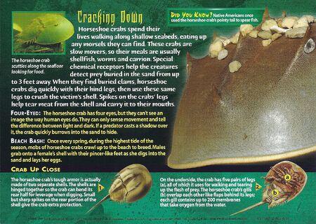 Horseshoe Crabs back