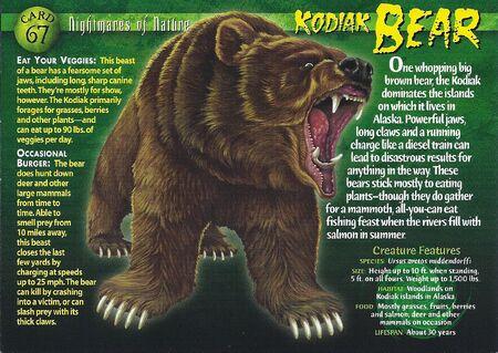 Kodiak Bear front