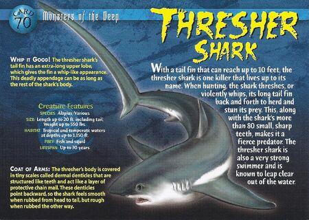 Thresher Shark front