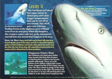 Caribbean Reef Shark back