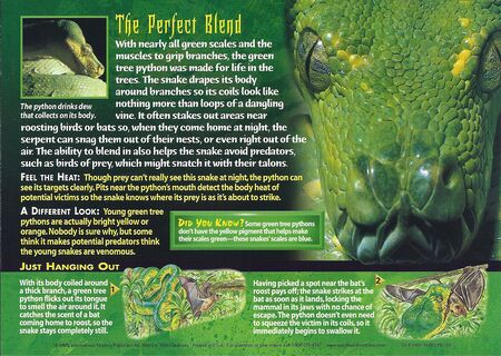 Green Tree Python back