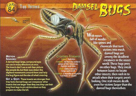 Damsel Bugs front