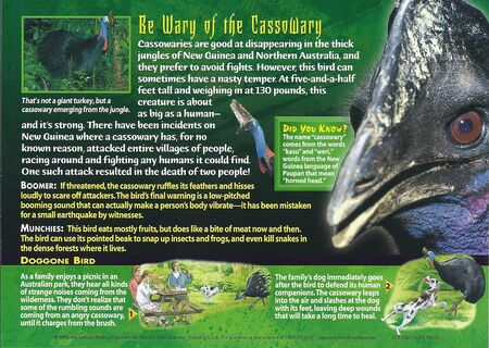 Cassowary back