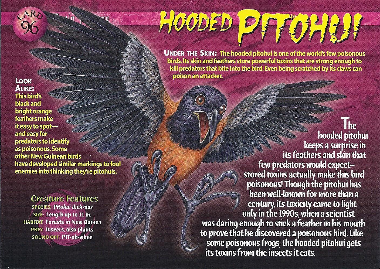 Hooded Pitohui Wierd N Wild Creatures Wiki Fandom