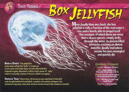Box Jellyfish front