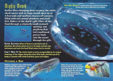 Whale Shark back