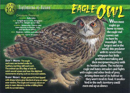 Eagle Owl front