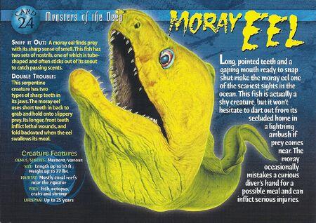 Moray Eel front