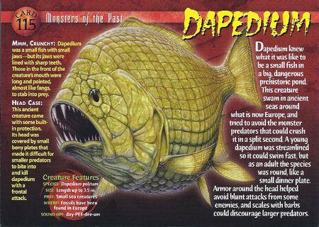 Dapedium front