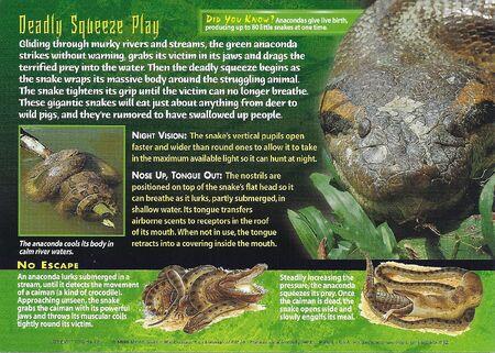 Green Anaconda back