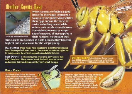 Ichneumon Wasp back