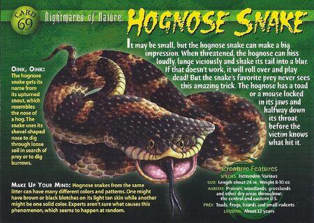 Hognose Snake front