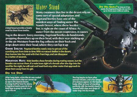 Fogstand Beetles back