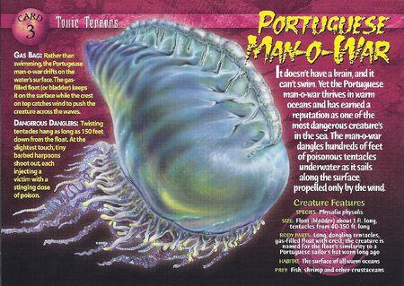 Portuguese Man-o-War front