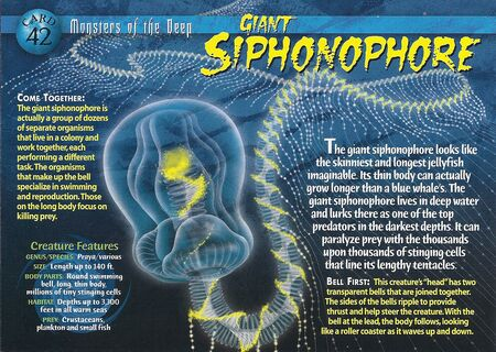 Giant Siphonophore front