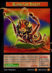 Gladiator Insect