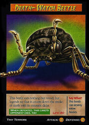 Death-Watch Beetle