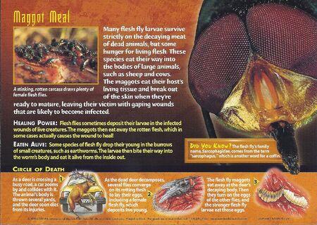 Flesh Flies back